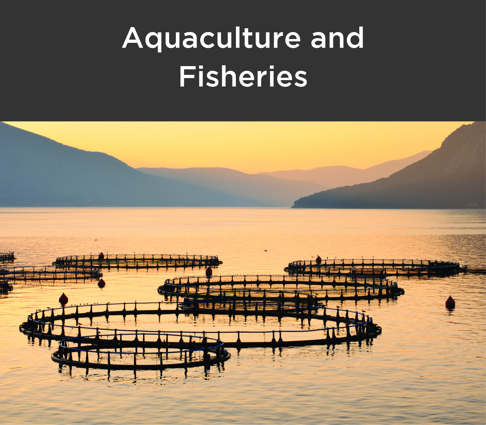 Sector aquaculture and fisheries